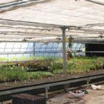 Cómo hacer un Semillero en el huerto, para Hortícolas y Aromáticas