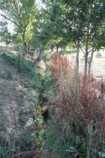 Arroyo cercano a los huertos de Sanse