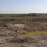 ¿Dónde ubicar el huerto?: Las mejores ideas y consejos