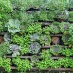 Cómo Cultivar Huertos Verticales: estructura, sustrato, especies y riego