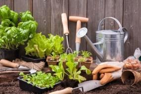 6 Fungicidas ecológicos contra los hongos del huerto: Muy eficaz