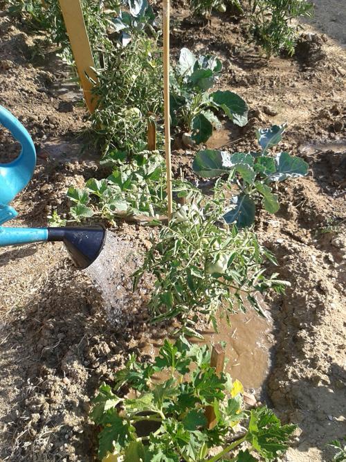 Huerta ecológica de la Asociación de Salud y Ayuda Mutua