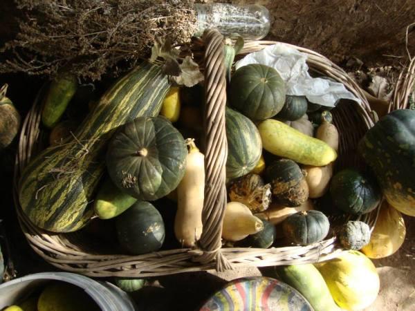 """Cosecha de la huerta ecológica en la aldea comunitaria """"Atrapasueños"""""""
