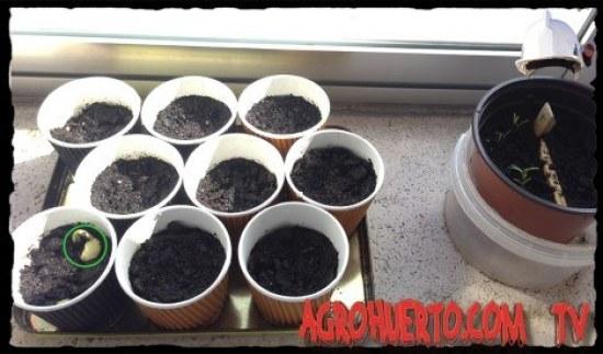 semilleros caseros para principiantes