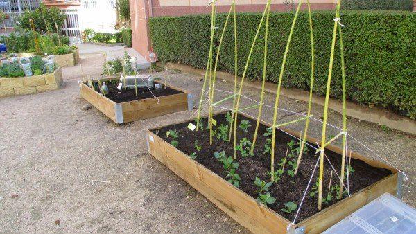 """Bancales de cultivo en """"El Huerto de la Bego"""" (Fuente: www.asociacionvecinosbegona.blogspot.com)"""