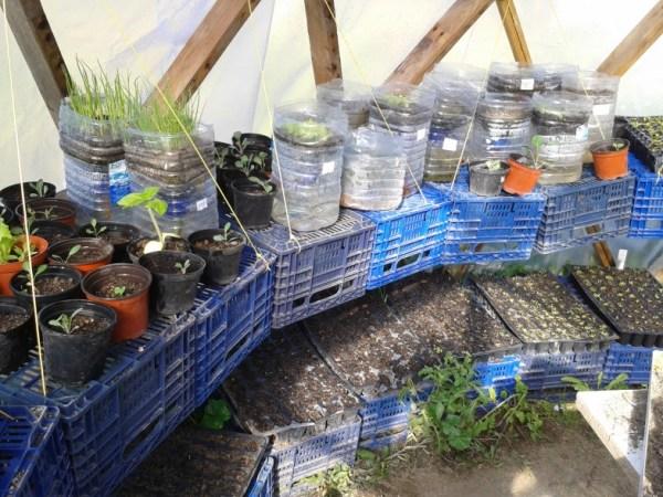 Plantel ecológico en El Bancal