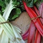 Cultivar Acelgas paso a paso: Siembra, cuidados y cosecha