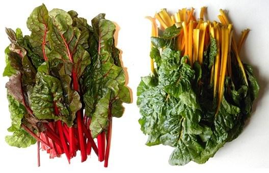 cultivar acelgas: distintas variedades