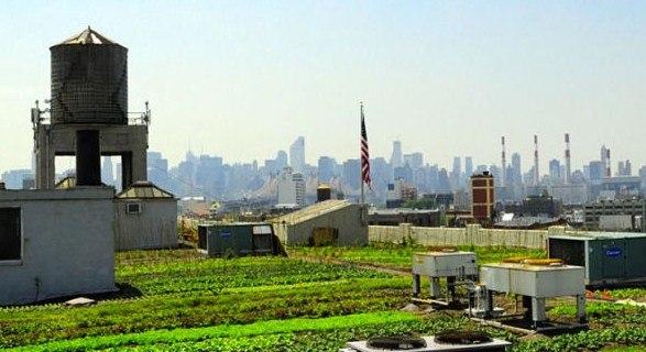 """""""Brookling Grange"""" en Nueva York, es el huerto urbano en azotea más grande del mundo y un claro ejemplo de que la Naturación urbana es posible.)"""