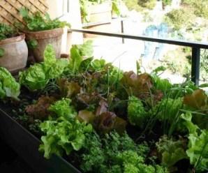 recipientes de cultivo para el mini huerto urbano