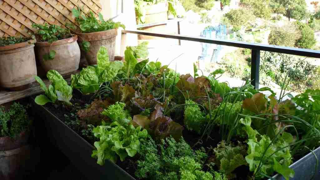 recipientes de cultivo para hacer un mini huerto urbano