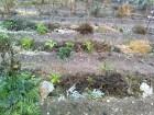 ¿Qué son los Bancales permanentes?: Cómo hacer huertos en bancales