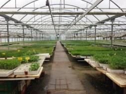Compra de plantas: Plantones, Pros y contras.