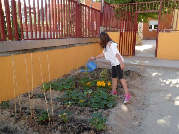 Una alumna del CEIP Maniano José de Larra riega los cultivos del huerto escolar