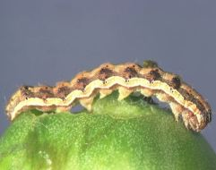Cuáles son las 7 plagas más dañinas para tus plantas del huerto