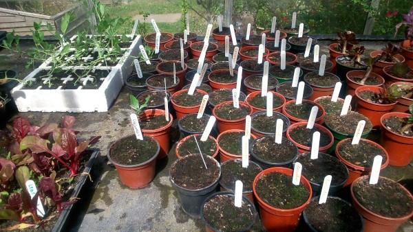 Semilleros en macetas en WALWORTH GARDEN FARM