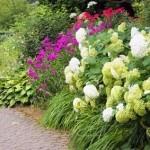 Setos para el Huerto Ecológico: Especies de setos beneficiosos
