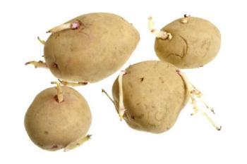 Patatas para sembrar