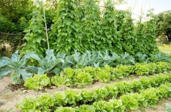 Cómo cultivar tus propias verduras