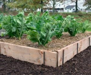 Bancales en el huerto reciclados: Cómo delimitar los cultivos