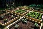 10 pasos para crear tu propio huerto en casa: Guía fácil y rápida