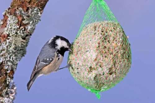 Cuelga bolas de grasa con semillas para atraer a los pájaros al huerto