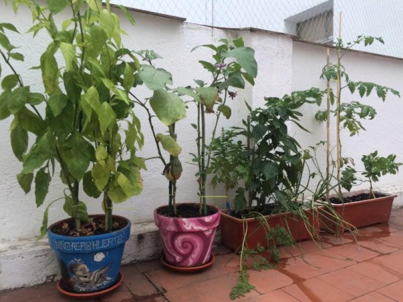 cómo cultivar un huerto: recipientes de cultivo