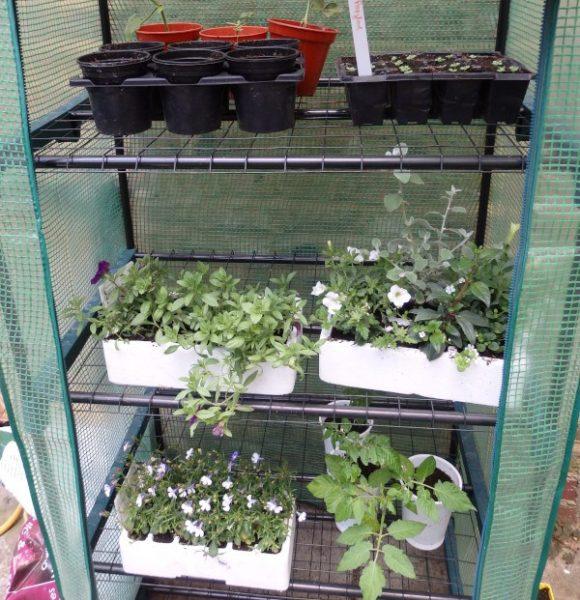 semilleros en el community garden de Londres