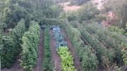 Huerto ecológico en Navarrevisca: urbanitas cultivando