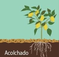 Mulching orgánico | Guía completa | Tipos de Acolchado y Ventajas