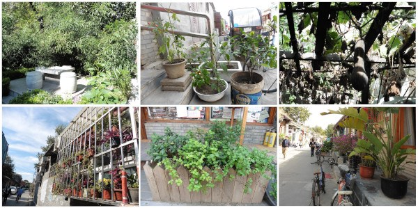 naturación urbana en los hutongs (Pekin)