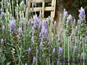 Plantas Aromáticas para la Huerta: Guía completa con Fotos