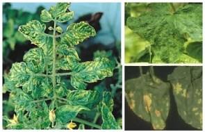 Manchas Amarillas en las Hojas de las Plantas: Causas y Soluciones Ecológicas