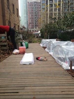 Túneles de plástico en huertos en azoteas