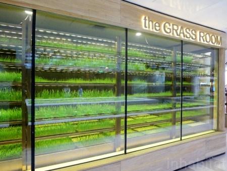 K11 urban farmming. The grass