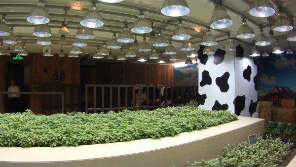 Aquí tenemos una vaca frisona dentro del centro comercial.