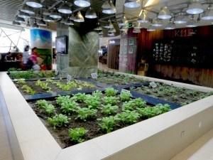 Aquí tenéis una perspectiva de la zona de bancales. Fuente: Fuente: http://inhabitat.com