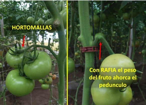 Aquí vemos la ventaja principal que ofrecen las mallas en espaldera, hortomallas, frente a otros sistemas de tutorado. Fuente: www.hortomallas.com
