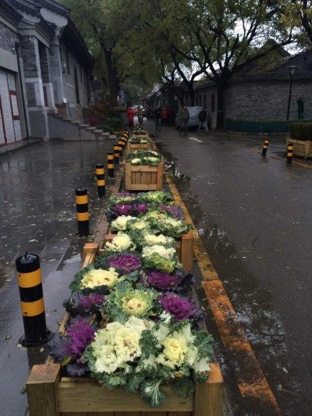 Aquí tenemos las famosas coles ornamentales que tanto adornan a la ciudad en invierno.