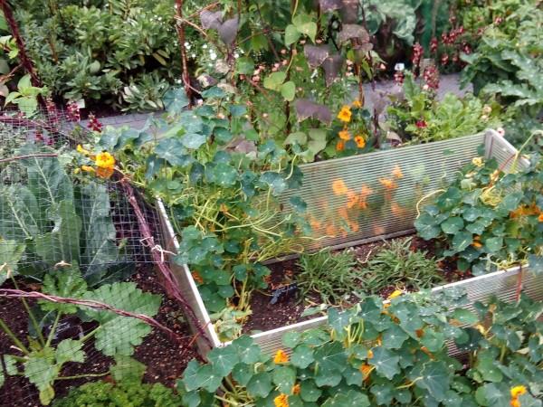 Materiales reciclados para dividir los bancales del huerto