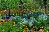 10 Plantas Útiles en el Huerto Ecológico