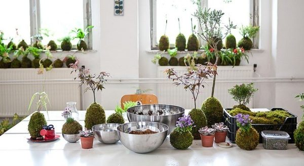 plantas originales para regalar