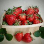 Plagas y enfermedades de la fresa: Guía completa con imágenes
