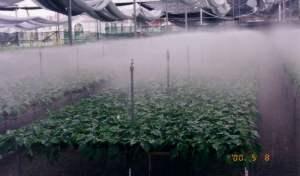 Sistema de riego por nebulización o Fog System: Guía completa