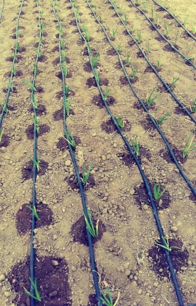 Riego y cultivos de la Huerta Charli