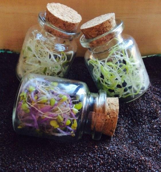 cómo hacer germinados caseros para ensaladas