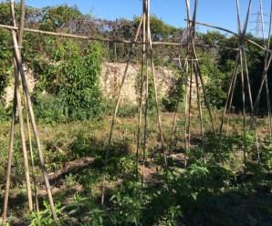 Cómo pasar de un huerto convencional a un huerto ecológico