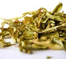 ¿Por qué se secan las hojas? | Hojas secas, marchitas o amarillas