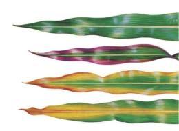 Qué nutrientes necesitan las plantas: Guía completa con fotos