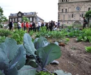 huertos urbanos en alemania: Andernach